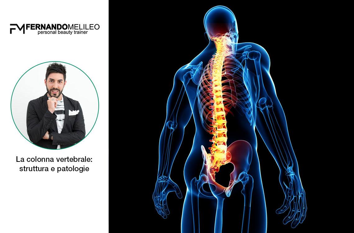 La colonna vertebrale: struttura e patologie