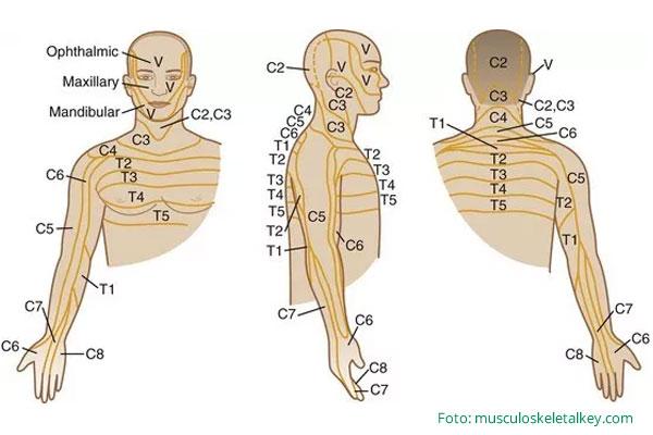 Discopatia c5 c6 c7 c8